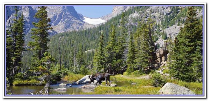 places to stay in estes park co with dogs